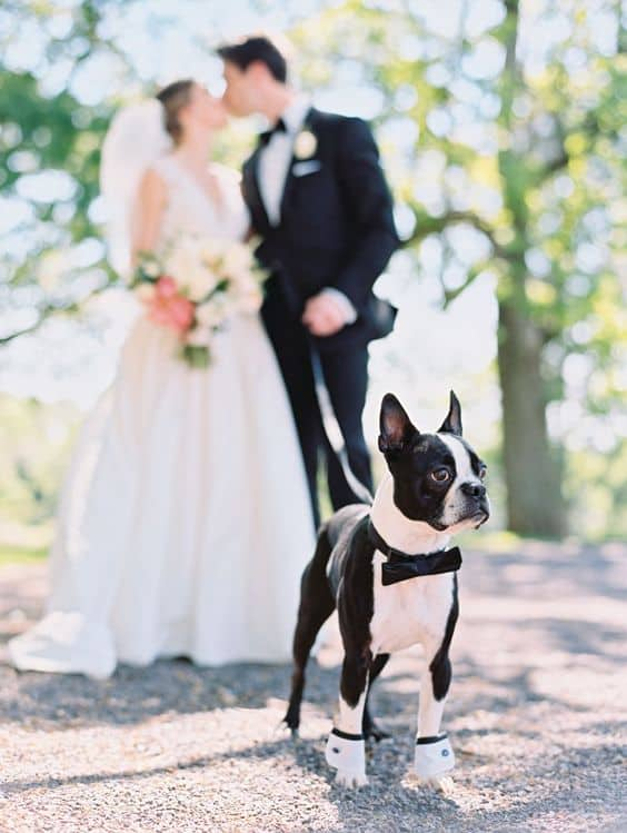 Best Dog in Wedding Cutest Puppy Special Day Mike Cassimatis Photography