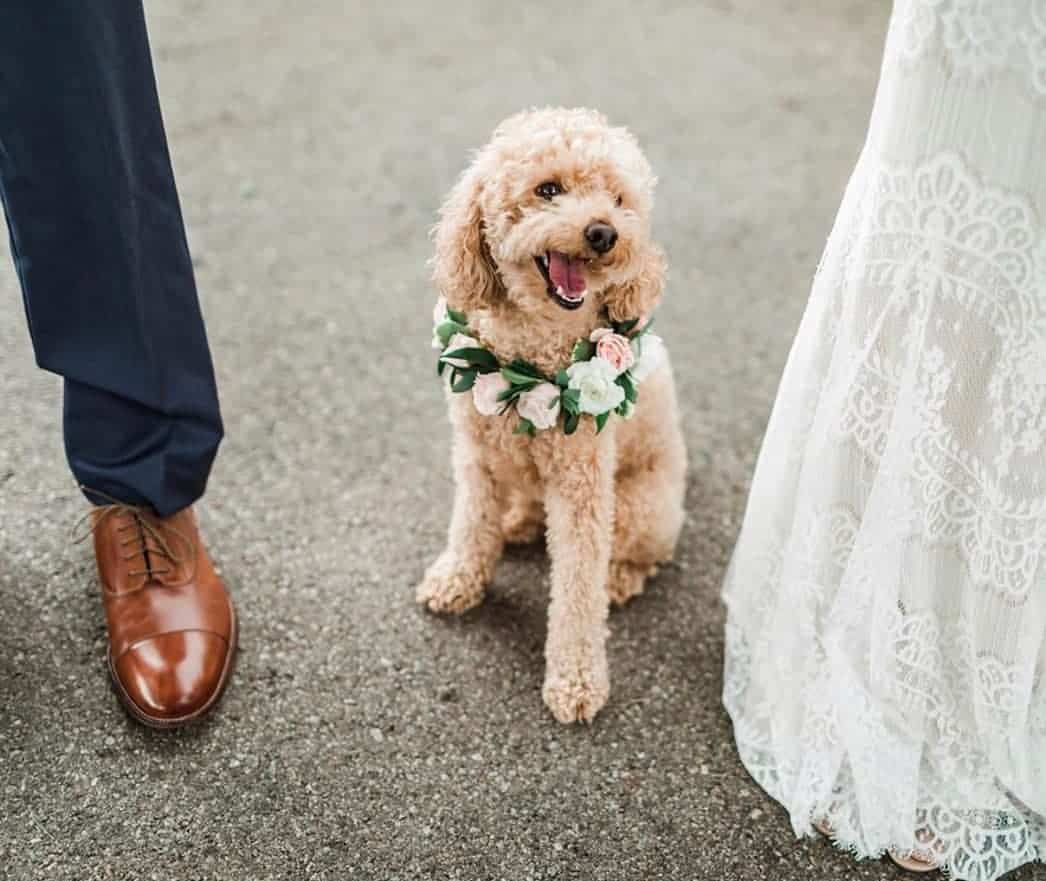 Floral Wedding with Puppies Wedding Puppies Cute Doggo Leah Kelley Photography