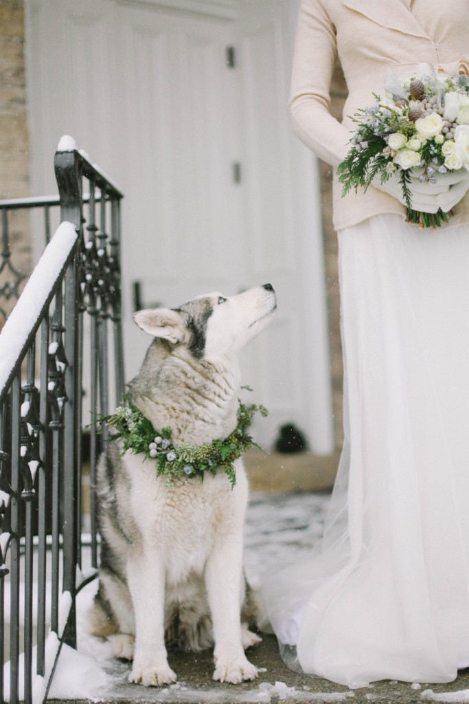 Husky in Elegant and Rustic Winter Wedding Jacque Lynn Photography