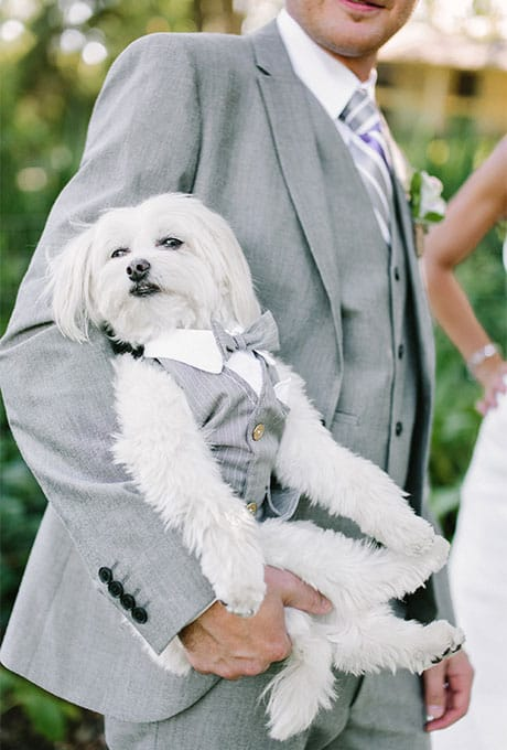 Wedding Puppy Pictures Cutest Puppy at Weddings Ring Bearer Bow Tie Brides.com